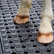 Dalles de stabilisation TR 01 - sabots de poneys - anti dérapant